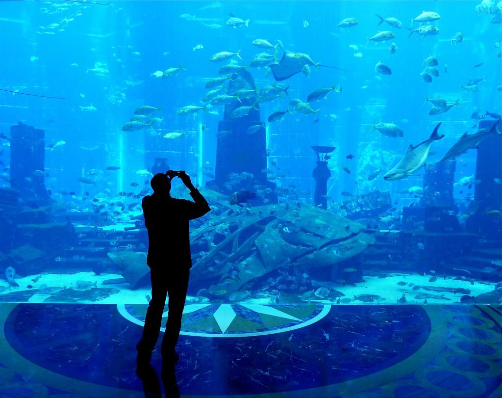 Самый большой в мире аквариум в Дубае