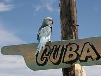 5 причин лететь на Кубу этой зимой